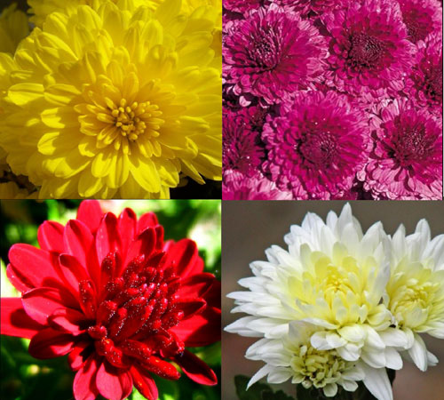 the symbolism of a flower in the chrysanthemums by john steinbeck Imagery & symbolism in the chrysanthemums by john steinbeck mother nature in steinbeck and hemingway there has been a fairly.